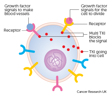 Diagram showing an example of how growth inhibitors can block more than one action in a cell